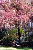 Student studying under Magnolia Tree, spring 2003