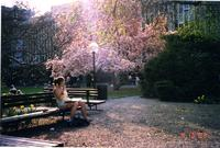 Student reading on bench on Lehman Lawn, 2003