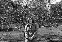 Student with flowering Magnolia tree, circa 1960s