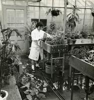 Botany student in greenhouse, circa 1962