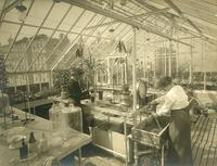 The Arthur Ross Greenhouse, circa 1912
