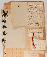 Mary Catherine Reardon Scrapbook, 1903-1911, page 33, Inclusion 2