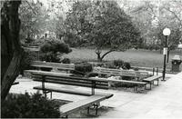 Benches near Lehman Lawn, 1979