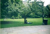 Student relaxing under tree on Lehman Lawn