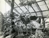 Botany student in greenhouse, 1944